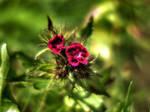 Flowers 233