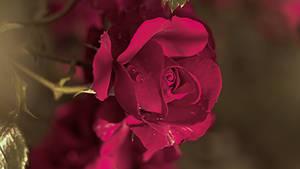 Flowers 256