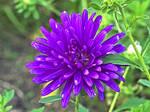 Flower 276