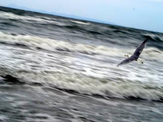 marti/seagull