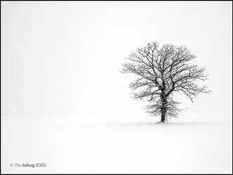 Tree in field of white by Hotelcal