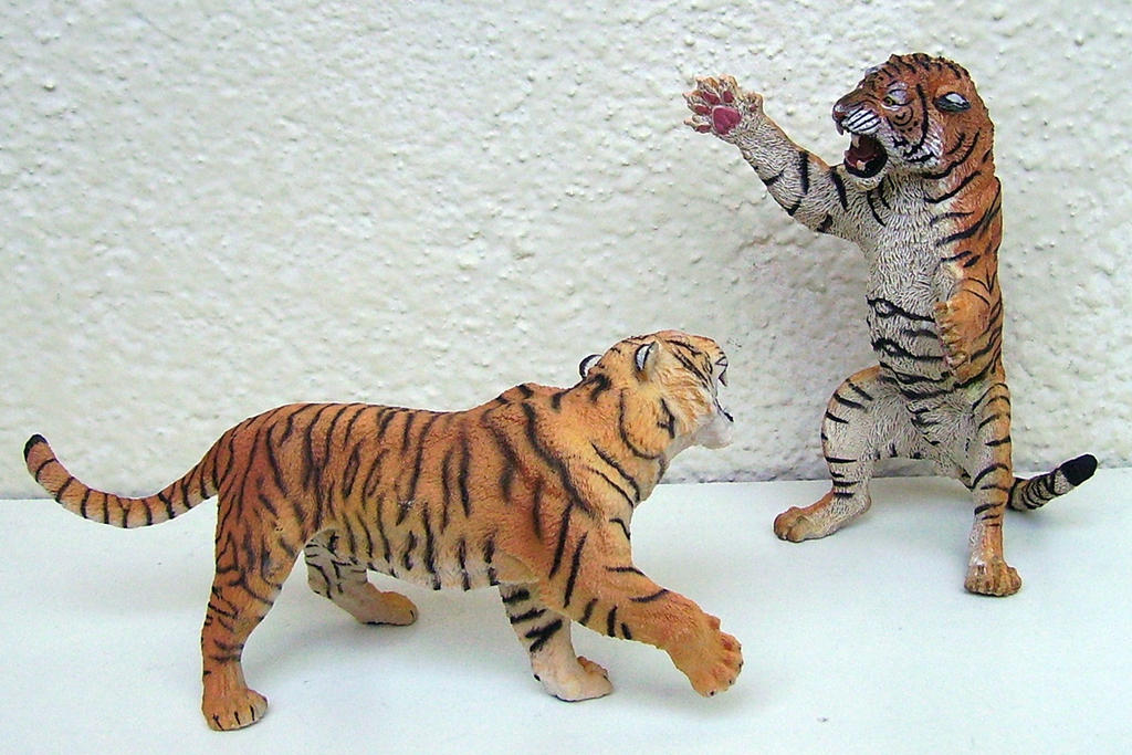 PAPO fighting tigers (3)
