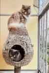 Sina sur et Noomi dans la petite maison verte (2)