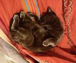 Noomi fait la sieste (5)