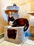 Quietus is in the cat tree (3)