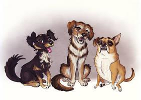 Pet portrait - Dogs