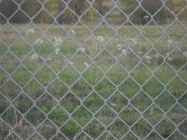 Flower prison by inedrox
