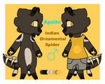 Pirate - Indian Ornamental Tarantula