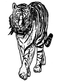 tiger for bc tkd webstie by MarioUComics