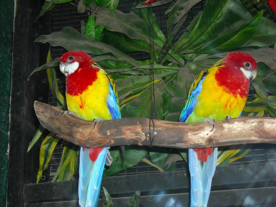 Names of Tropical Birds Tropical Rainforest Birds