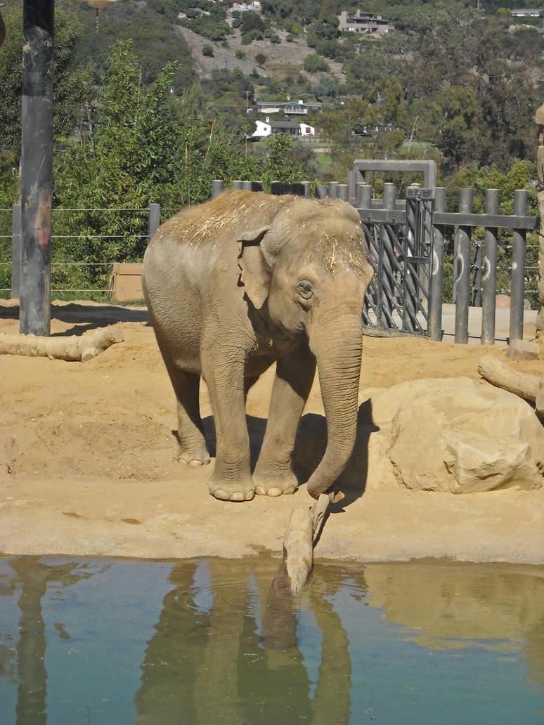 Elephant in My Backyard by Zu-zu1