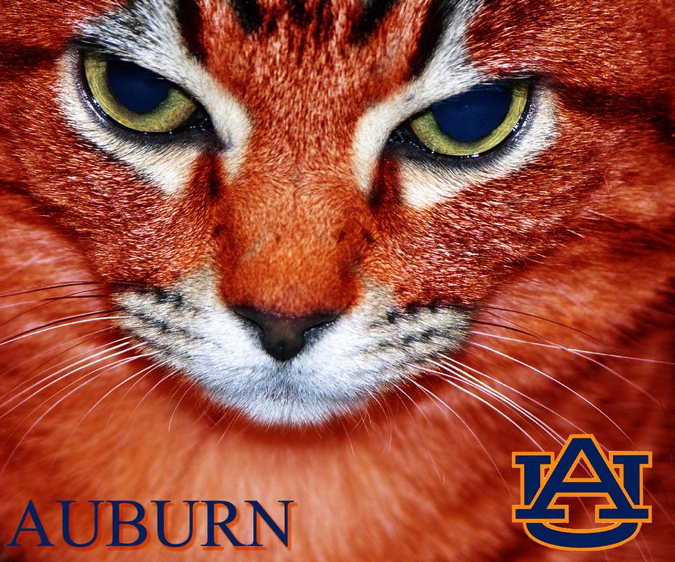 Auburn University Wallpaper By Olorinthewhite