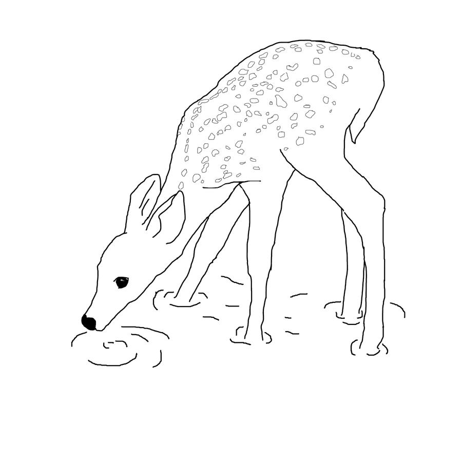 lion drinking water coloring pages   Deer Drawing by Alex-92 on DeviantArt