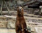 Bro-Bear by gamemastertom