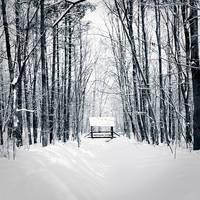 Las Bielanski by sekcyjny