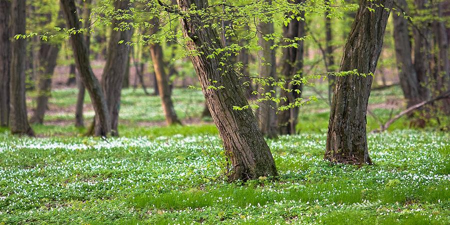 Wiosna by sekcyjny