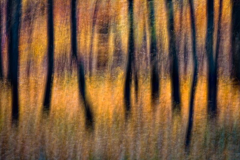 Autumn Impressions by sekcyjny