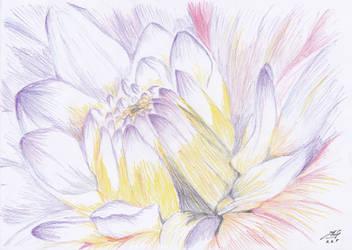purple flower by adhityano