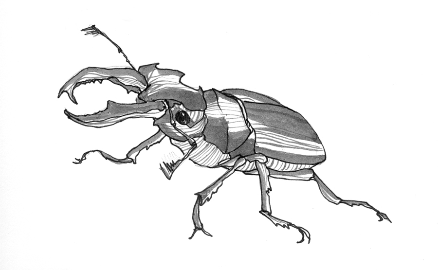 Stag Beetle Sketch by tonybricker on DeviantArt