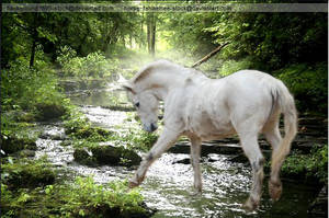 white horse creek by horse-stock