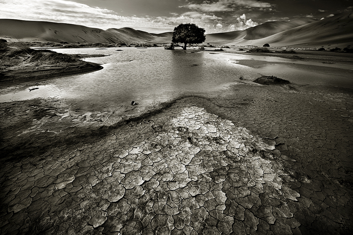 Water Tree by Zefisheye