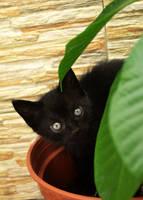 The Gardening Kitten by loveless9741