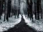 Winter Lane