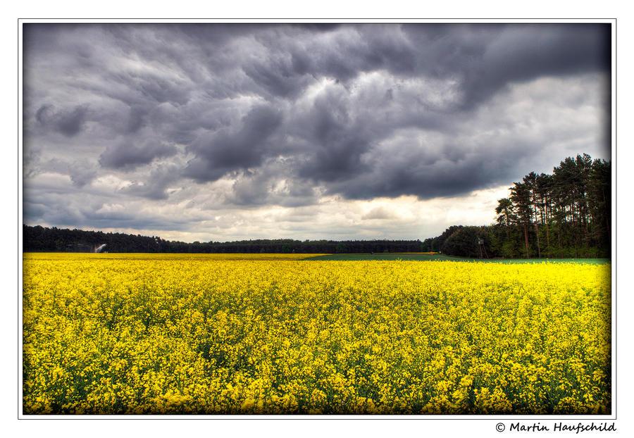 Waiting for rain I by Haufschild