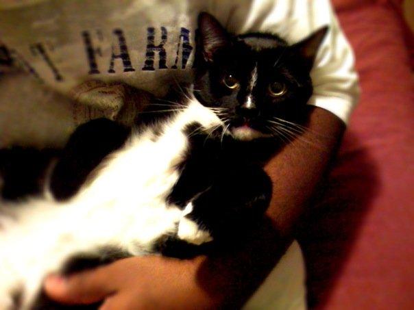 Batman - My Cat by cdmalcolm