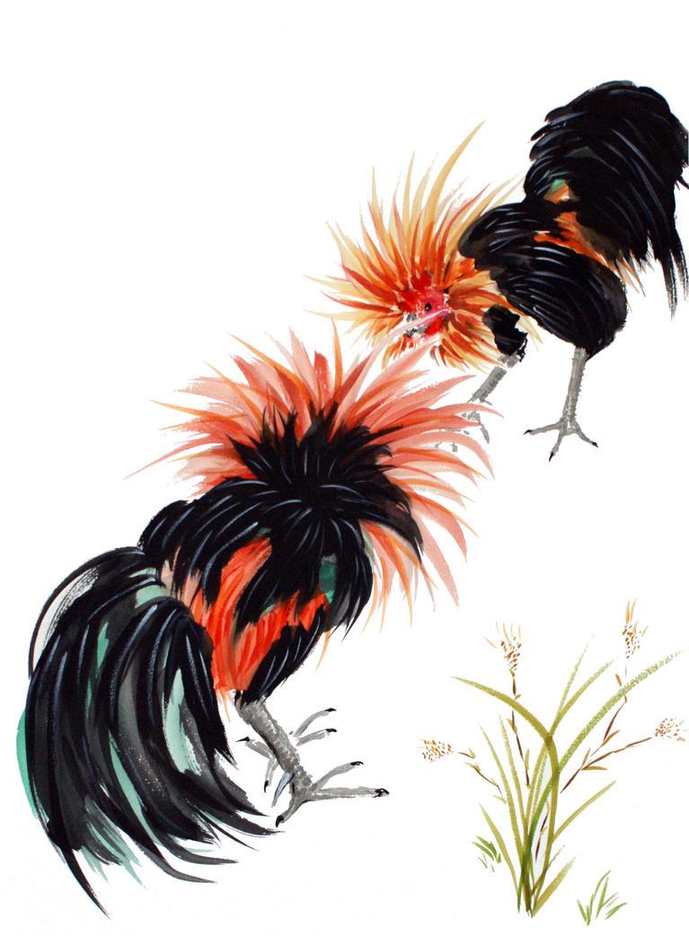 Fighting cocks colour by ColeBarrett