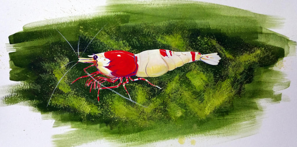 Crystal Red Shrimp painting by ColeBarrett