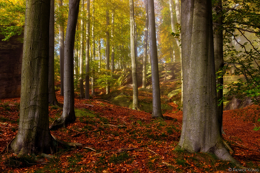 view into beeches forest by functionizer