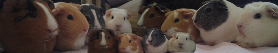Photo of some really cute piggies!