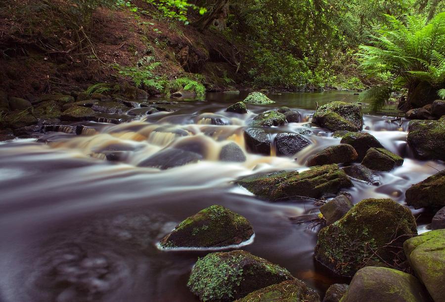 Cragside River by SilverSurfer
