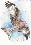 Red Kite by DragonRider02