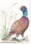 Pheasant by DragonRider02