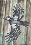 Woodpecker painting by DragonRider02