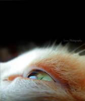 Green eye by Bluecknight