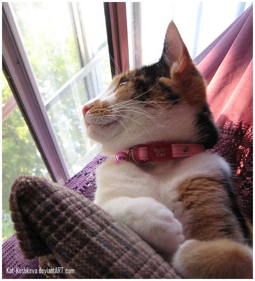 Window Cat by Kat-Koshkova