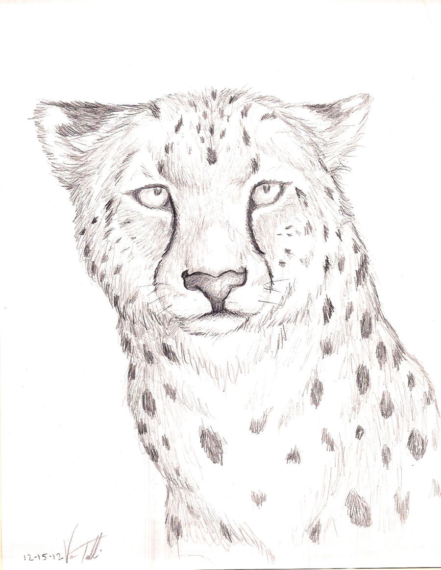 cheetah by timbress on deviantart