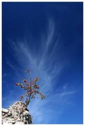 Rowan vs Sky by waflar