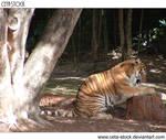 Tiger 17