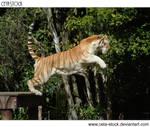 Tiger 22