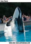 Orca Jump 2