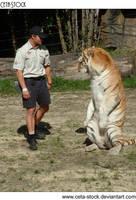 Tiger 24 by Ceta-Stock