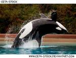 Orca Jump 3