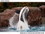 Orca Jump 4