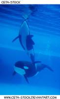 Orca Underwater 2