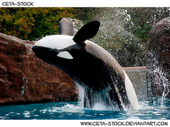 Orca Jump 5 by Ceta-Stock
