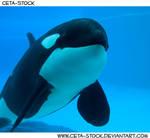 Orca Underwater 4